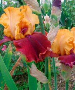 smartmove iris novaspina
